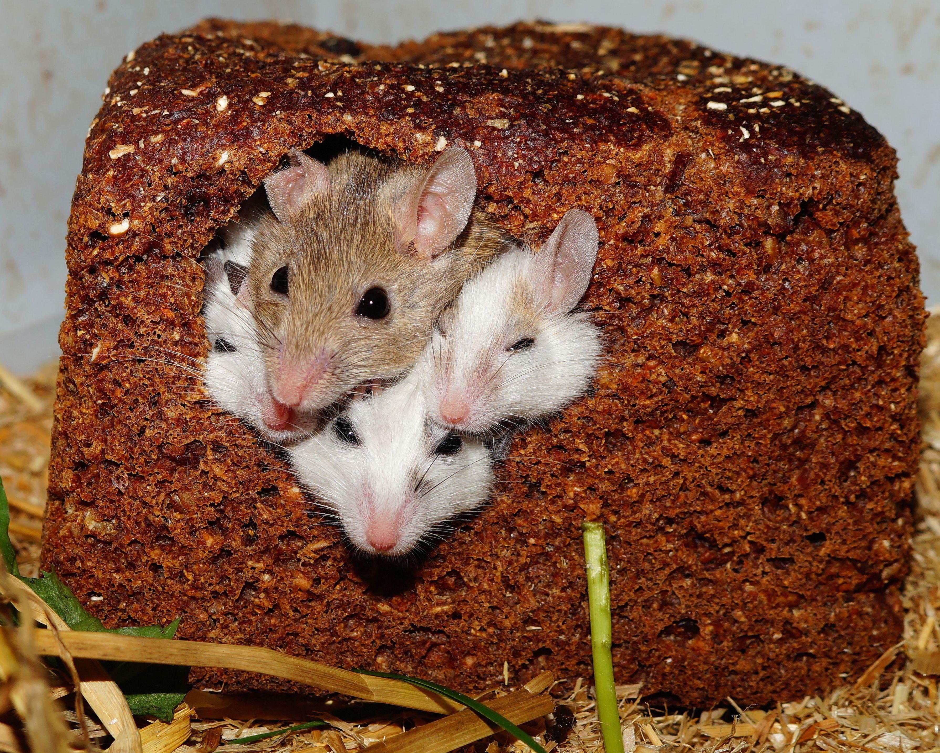 intolleranze alimentari e celiachia
